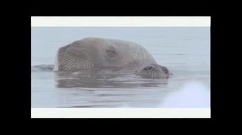 Rolex TV Spot, 'National Geographic: Adam Ravtech' - Thumbnail 8