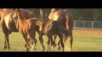 Busby Quarter Horses TV Spot, 'Blazin Jetolena'