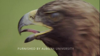 Auburn University TV Spot, 'Montage' - Thumbnail 4