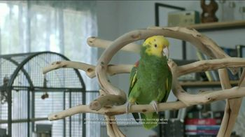 Volkswagen Best. Thing. Ever. Event TV Spot, 'Parrot' - 2110 commercial airings