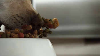 Purina Dog Chow Light & Healthy TV Spot - Thumbnail 5