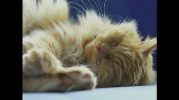 Cat's Meow Mat TV Spot - Thumbnail 1