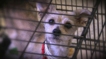 ASPCA TV Spot, 'Love' Featuring Kim Rhodes - Thumbnail 1