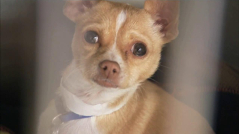 ASPCA TV Spot, 'Love' Featuring Kim Rhodes - Thumbnail 3