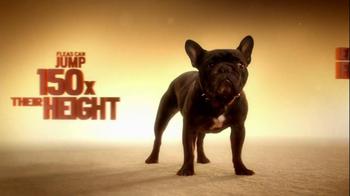 Frontline Tritak for Dogs TV Spot - Thumbnail 2