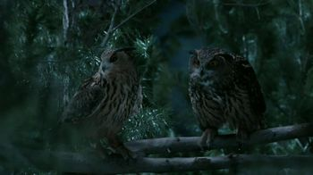GEICO TV Spot, 'Owls'