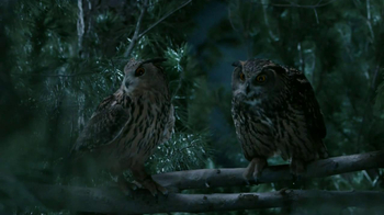 GEICO TV Spot, 'Owls' - 7917 commercial airings