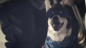 PetSmart Holiday TV Spot, 'Toys and Treats' - Thumbnail 7