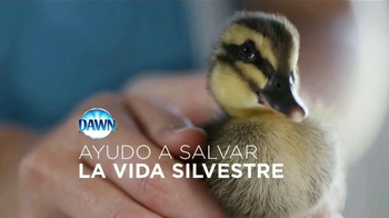 Dawn Ultra TV Spot, 'La vida silvestre' [Spanish] - Thumbnail 3