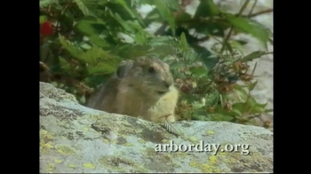 Arbor Day Foundation TV Spot, 'National Treasures' Featuring Peter Coyote - Thumbnail 9