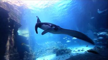 Atlantis TV Spot, 'Imagine' - Thumbnail 3