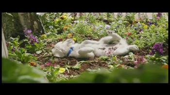 PetSmart Puppy Starter Kit TV Spot, 'Puppies' - Thumbnail 3