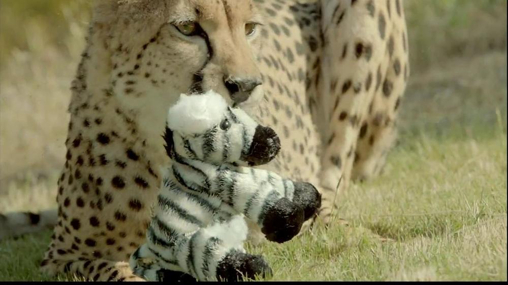 san diego zoo safari park tv commercial zebra and cheetah ispot tv