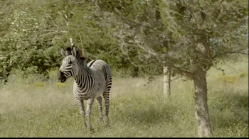 San Diego Zoo Safari Park TV Spot, 'Zebra and Cheetah' - Thumbnail 1