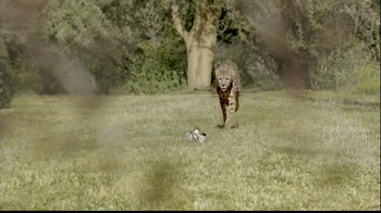 San Diego Zoo Safari Park TV Spot, 'Zebra and Cheetah' - Thumbnail 2