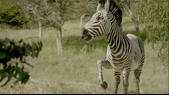 San Diego Zoo Safari Park TV Spot, 'Zebra and Cheetah' - Thumbnail 3