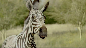 San Diego Zoo Safari Park TV Spot, 'Zebra and Cheetah' - Thumbnail 4