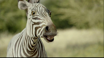 San Diego Zoo Safari Park TV Spot, 'Zebra and Cheetah' - Thumbnail 6