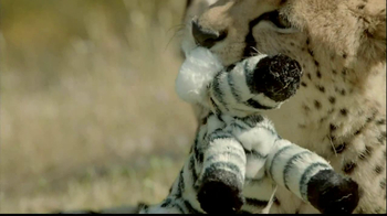 San Diego Zoo Safari Park TV Spot, 'Zebra and Cheetah' - Thumbnail 7