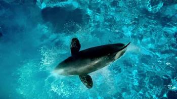 SeaWorld TV Spot, 'The Sea' - Thumbnail 6
