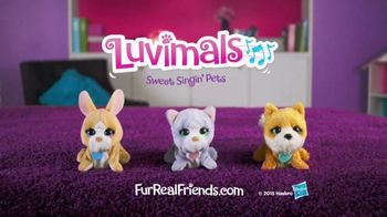 FurReal Friends Luvimals TV Spot, 'Play and Sing Together'