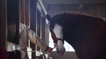 Budweiser Super Bowl 2015 Commercial, 'Lost Dog' Song by Sleeping at Last - Thumbnail 2