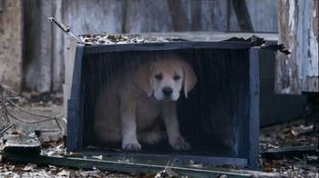 Budweiser Super Bowl 2015 Commercial, 'Lost Dog' Song by Sleeping at Last - Thumbnail 5