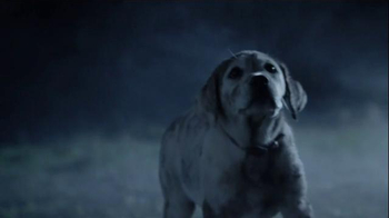 Budweiser Super Bowl 2015 Commercial, 'Lost Dog' Song by Sleeping at Last - Thumbnail 7