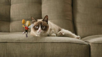 Honey Nut Cheerios TV Spot, 'Buzz Meets Grumpy Cat'  - Thumbnail 4