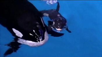 SeaWorld TV Spot, 'Killer Whales Change Lives' - Thumbnail 7