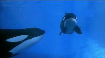 SeaWorld TV Spot, 'Killer Whales Change Lives' - Thumbnail 9