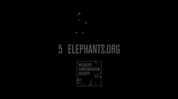 Wildlife Conservation Society TV Spot, '96 Elephant' Feat. Audra McDonald - Thumbnail 10