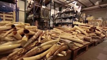 Wildlife Conservation Society TV Spot, '96 Elephant' Feat. Audra McDonald - Thumbnail 6