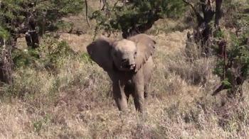 Wildlife Conservation Society TV Spot, '96 Elephant' Feat. Audra McDonald - Thumbnail 8