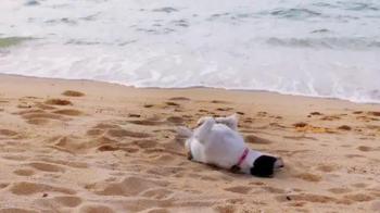 Petz: Countryside TV Spot, 'Life on a Beach' - Thumbnail 2