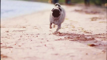 Petz: Countryside TV Spot, 'Life on a Beach' - Thumbnail 3