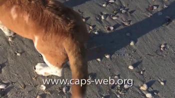 Companion Animal Protection Society TV Spot, 'Second Chance at Life' - Thumbnail 4