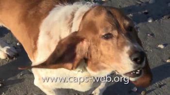 Companion Animal Protection Society TV Spot, 'Second Chance at Life' - Thumbnail 7
