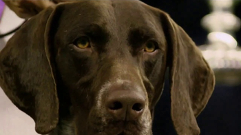 Purina Pro Plan TV Spot, 'Westminster Kennel Club Dog Show Champions' - Thumbnail 1