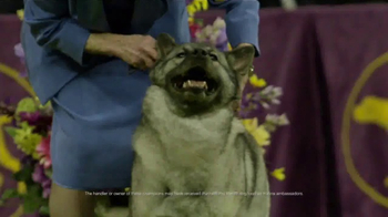 Purina Pro Plan TV Spot, 'Westminster Kennel Club Dog Show Champions' - Thumbnail 7