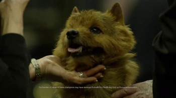 Purina Pro Plan TV Spot, 'Westminster Kennel Club Dog Show Champions' - Thumbnail 8