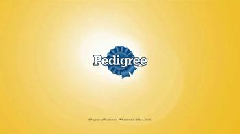 Pedigree TV Spot, 'Dales lo mejor' [Spanish] - Thumbnail 7