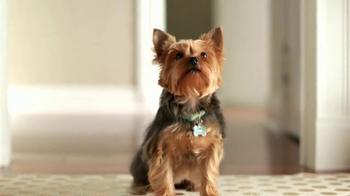Purina Bella Dog Food TV Spot, 'Pampered Meals' - Thumbnail 7
