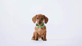 PetSmart TV Spot, 'Tucker the Dachshund Puppy' - Thumbnail 2