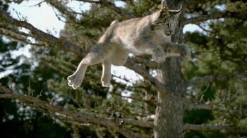 Blue Buffalo BLUE Wilderness Cat Food TV Spot, 'Lynx Hunger'