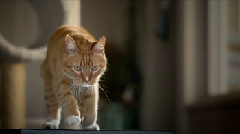 Blue Buffalo BLUE Wilderness Cat Food TV Spot, 'Lynx Hunger' - Thumbnail 3