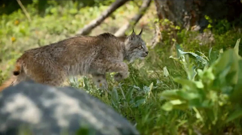 Blue Buffalo BLUE Wilderness Cat Food TV Spot, 'Lynx Hunger' - Thumbnail 4