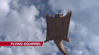 Wendy's 4 for $4 TV Spot, 'Double Stack Option: Flying Squirrels' - 3096 commercial airings