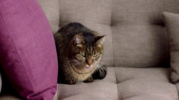 Cat's Pride Fresh & Light TV Spot, 'Best Litter' Featuring Katherine Heigl - Thumbnail 3