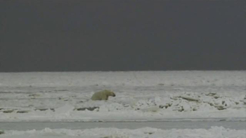 Center for Biological Diversity TV Spot, 'Polar Bear' - Thumbnail 1